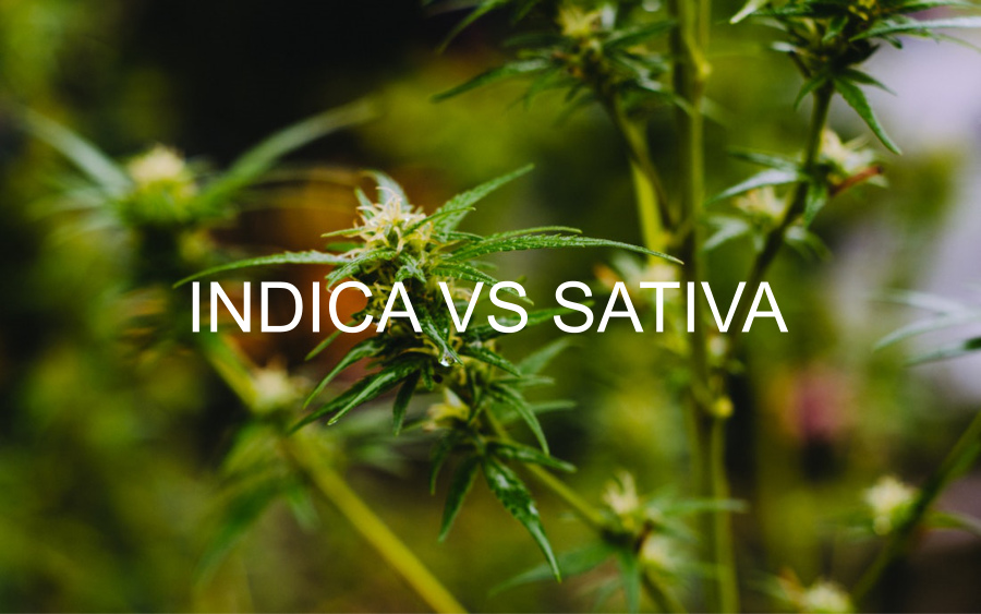 Indica vs Sativa. What's the Difference?