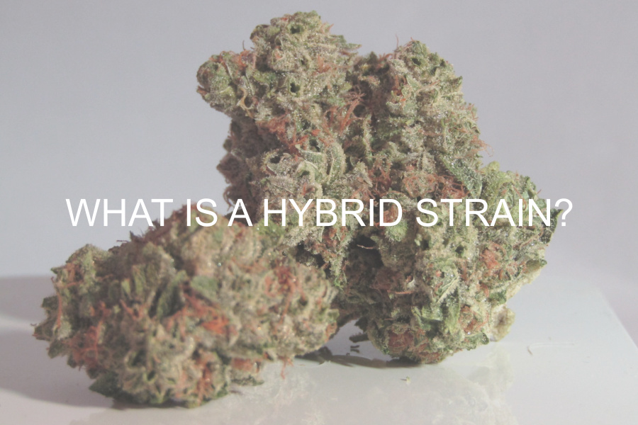 What is a Hybrid Strain?